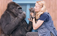 Koko the Gorilla and Penny Patterson