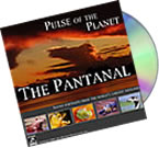 Sounds of the Pantanal